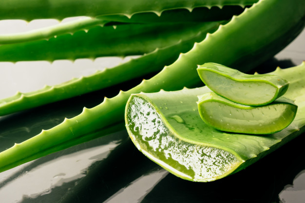 Does Aloe Vera Cure Yeast Infection?