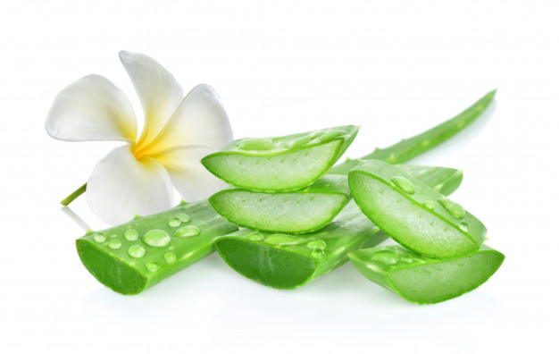 Aloe vera kills Candida cells