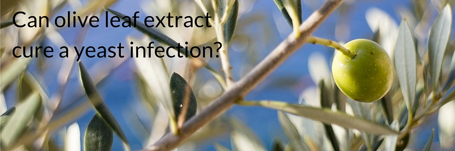 Can olive leaf extract cure a yeast infection