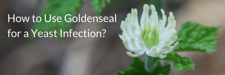 How to use goldenseal for a yeast infection?