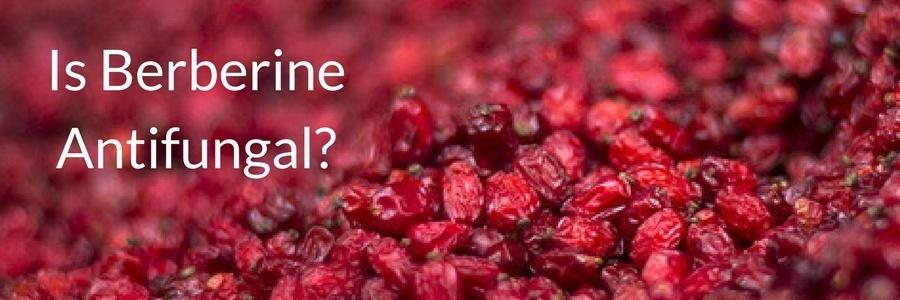 Is berberine antifungal?