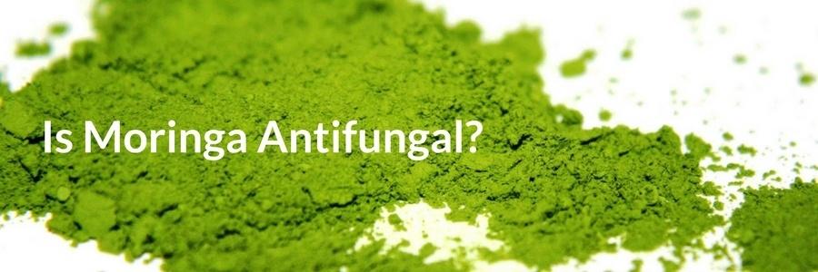 Is Moringa Antifungal