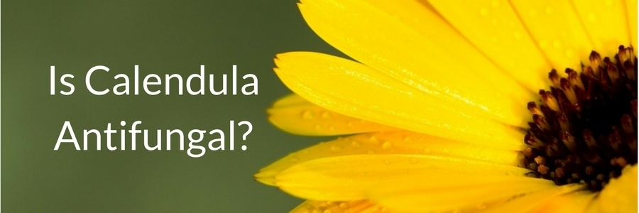 Is Calendula Antifungal?