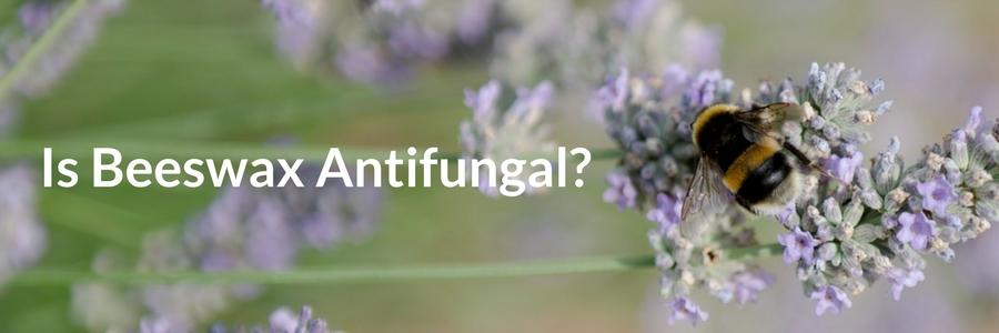 is beeswax antifungal